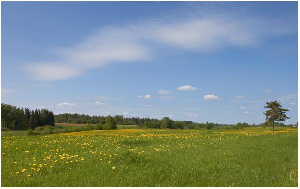 Kevadine maastik