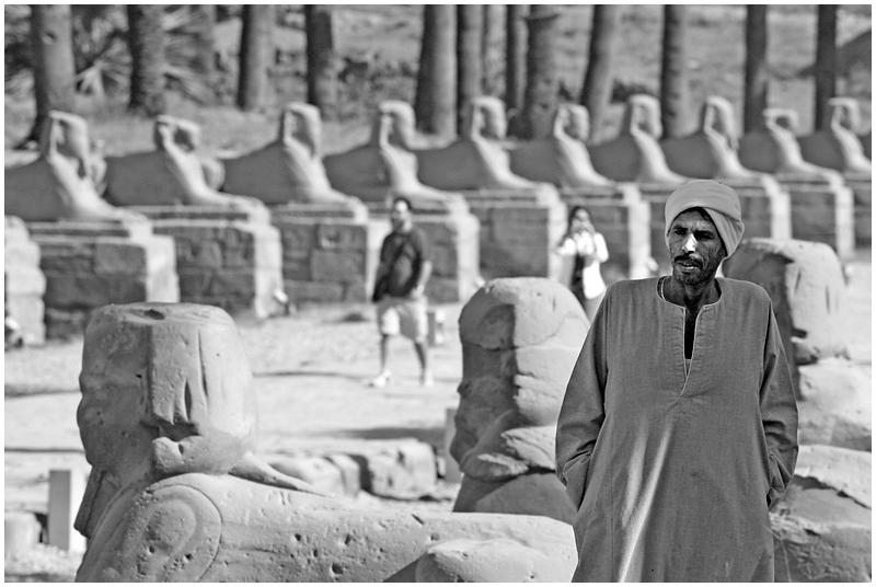 Luxor alley of Shinxes