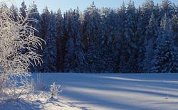 Talvises valguses