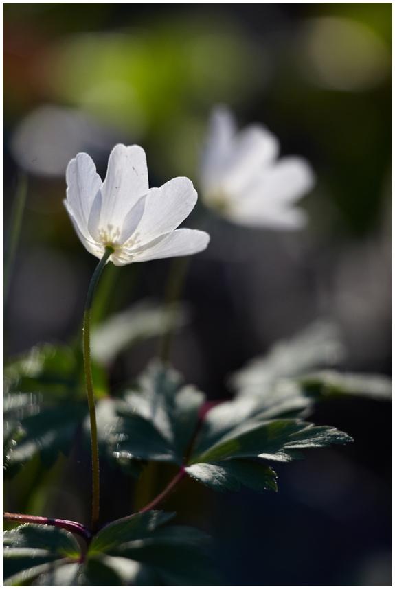 Kevadine / Springtime, 3