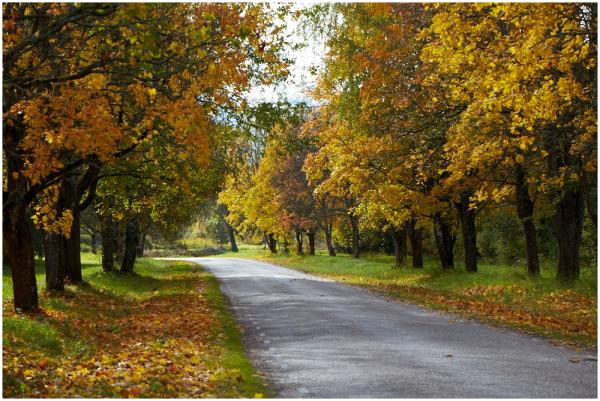 Lemmiktee / Favorite road