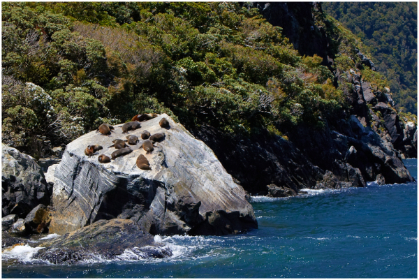 On the rocks, 11   Milford Sound