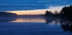 Morning in bog