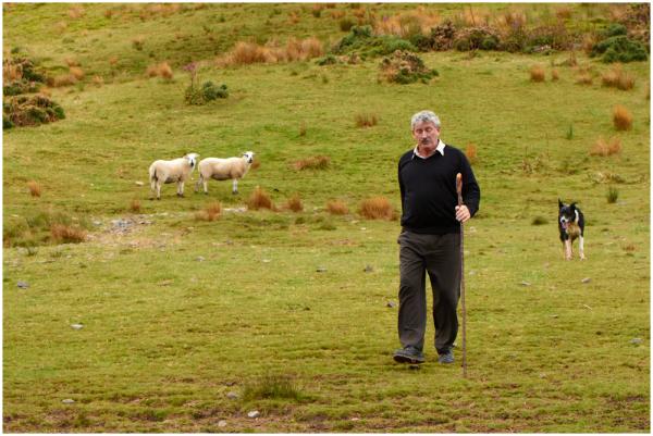 Karjus / The shepherd, 1