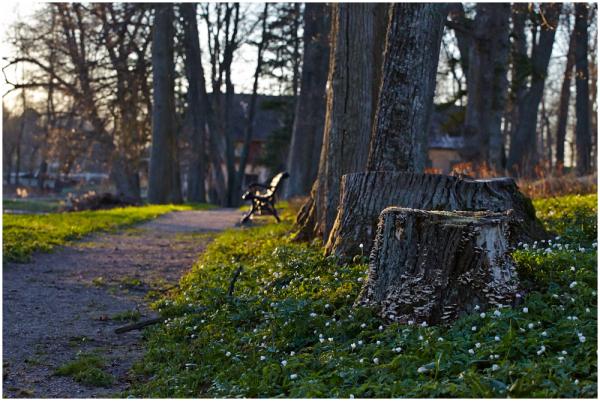 Väimela mõisa pargis