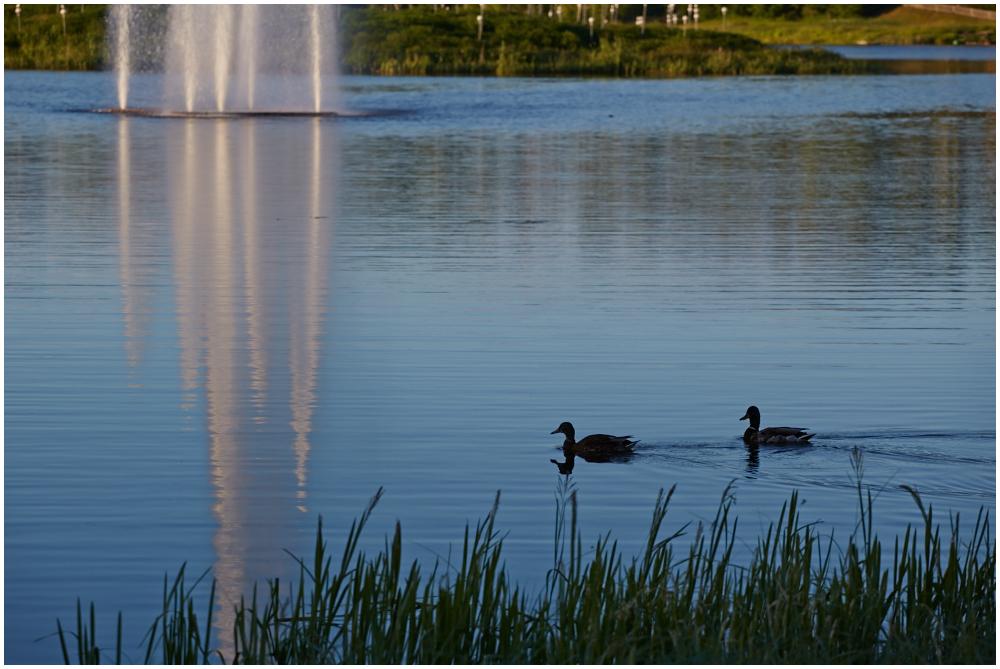 Põlva järv