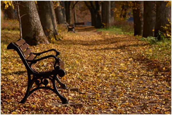 Lehesadu / Fall time