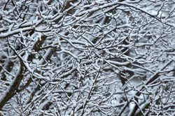 Lumi tuli