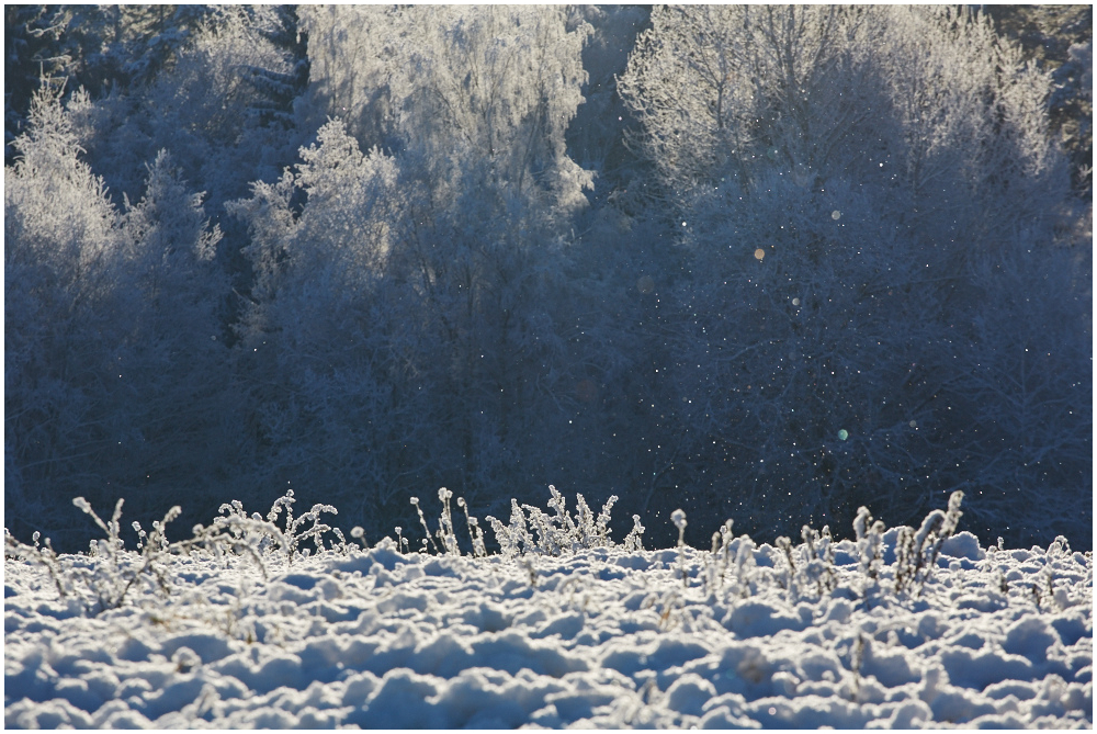 Külm päev