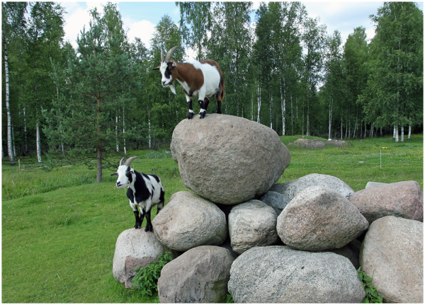 Karjamaa / Pasture, 3