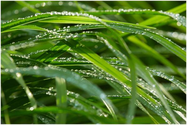 Peale vihma / After the rain