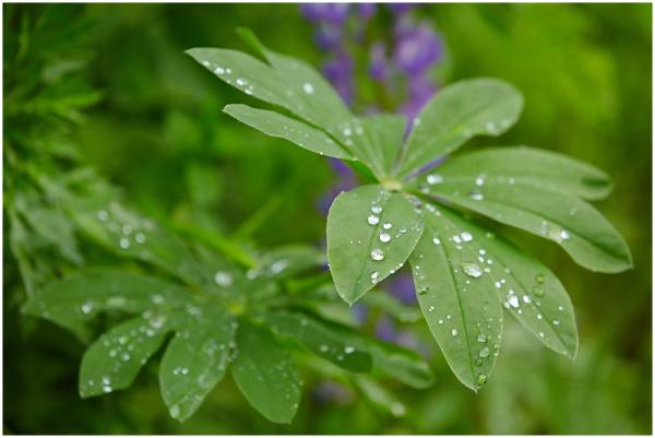 Peale vihma