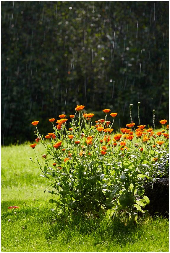 Vihma ja päikest