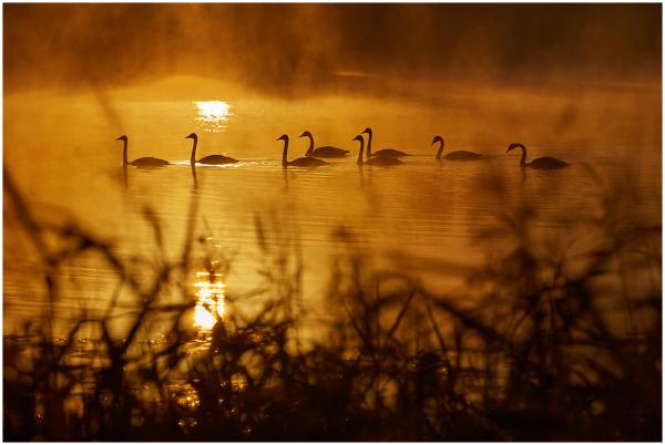 Aminus3 Featured photo Hommik järvel / Morning by lake | 22 December 2014