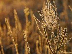 Kuldne hommik / Golden morning
