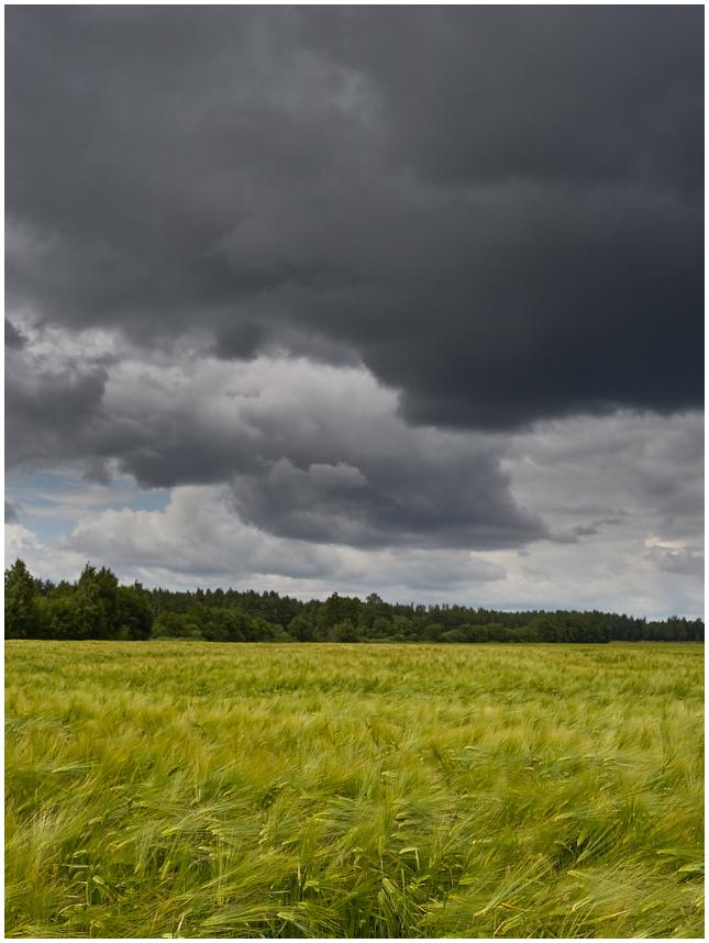 Vihma ootel