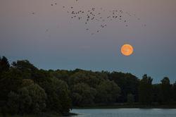 Kuu kohal