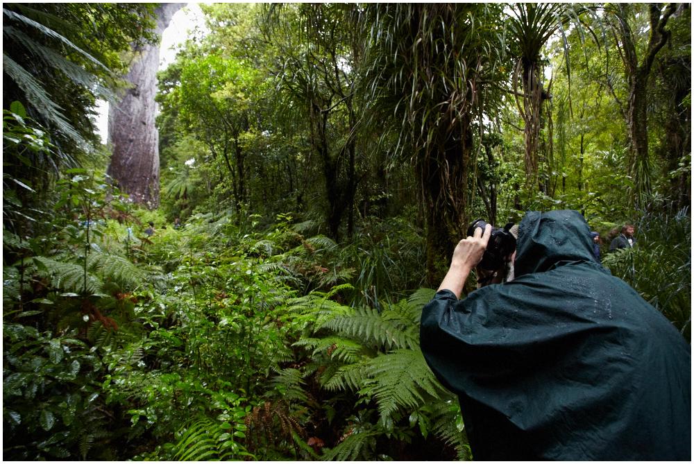 Tane Mahuta, New Zealand
