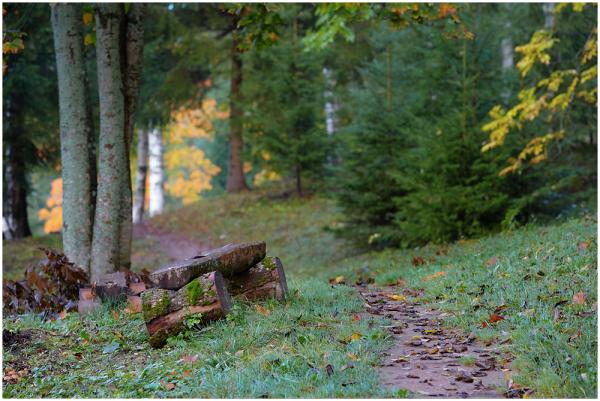 Sügisene / Autumnal