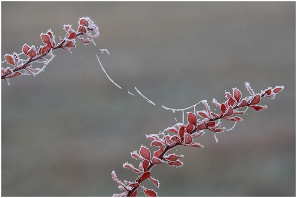 Õrn side / Fragile connection