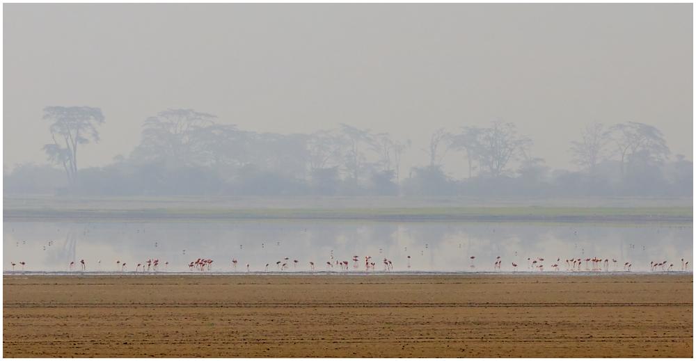 Lesser flamingos at Ngorongoro Crater, Tanzania
