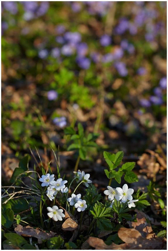 Kevade värvid