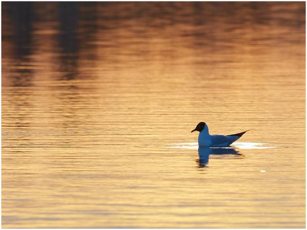 Õhtu järvel / Evening on the lake