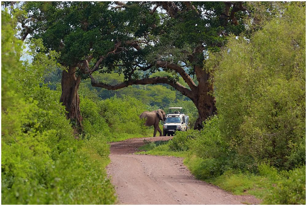 Safari in Tarangire, Tanzania