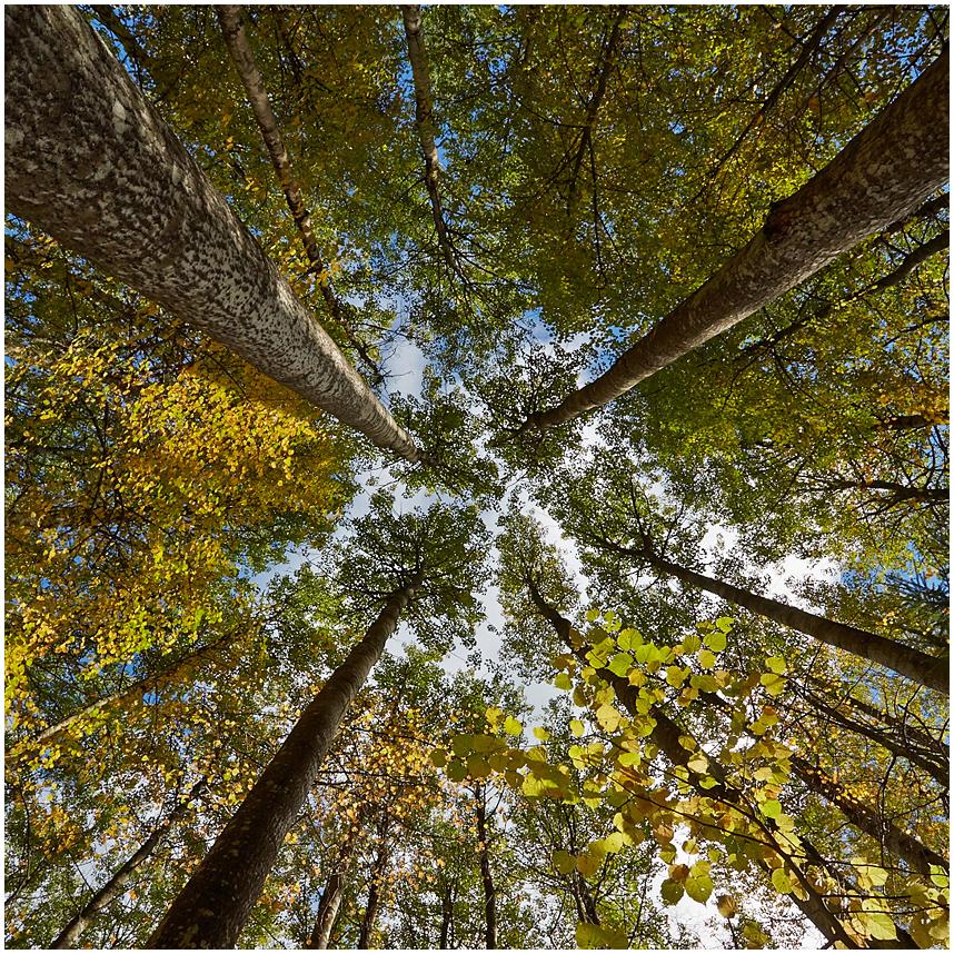Järvselja mets