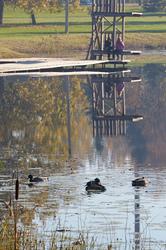 Kanariku järv Parksepas