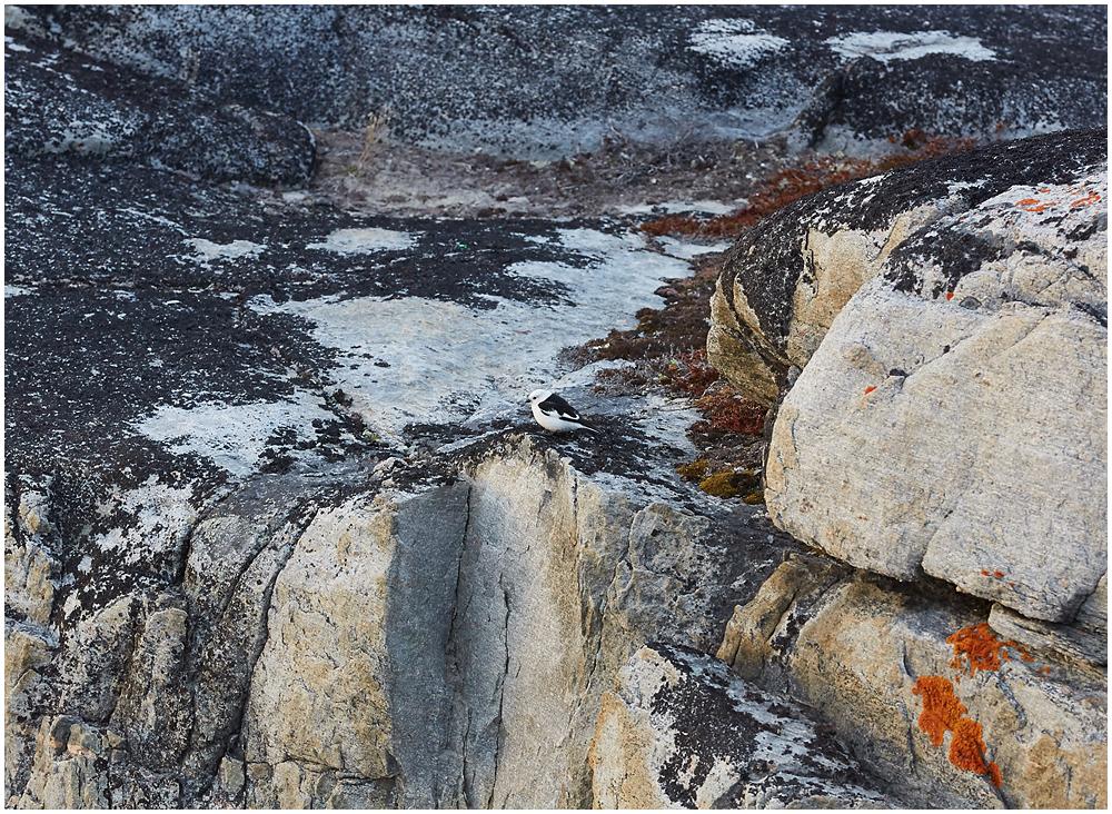Hangelind Gröönimaal