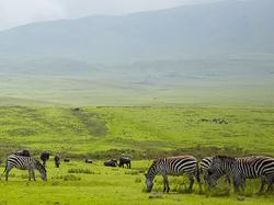 Tansaania