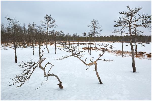 Luhasoo raba talvel