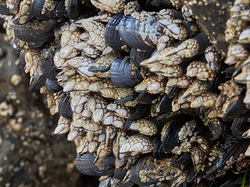 Cape Kiwanda, Oregon, U.S.A.