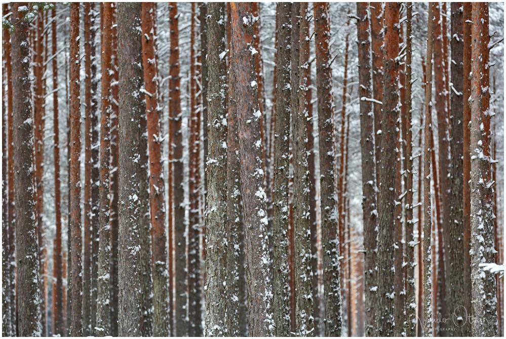 Talve kood
