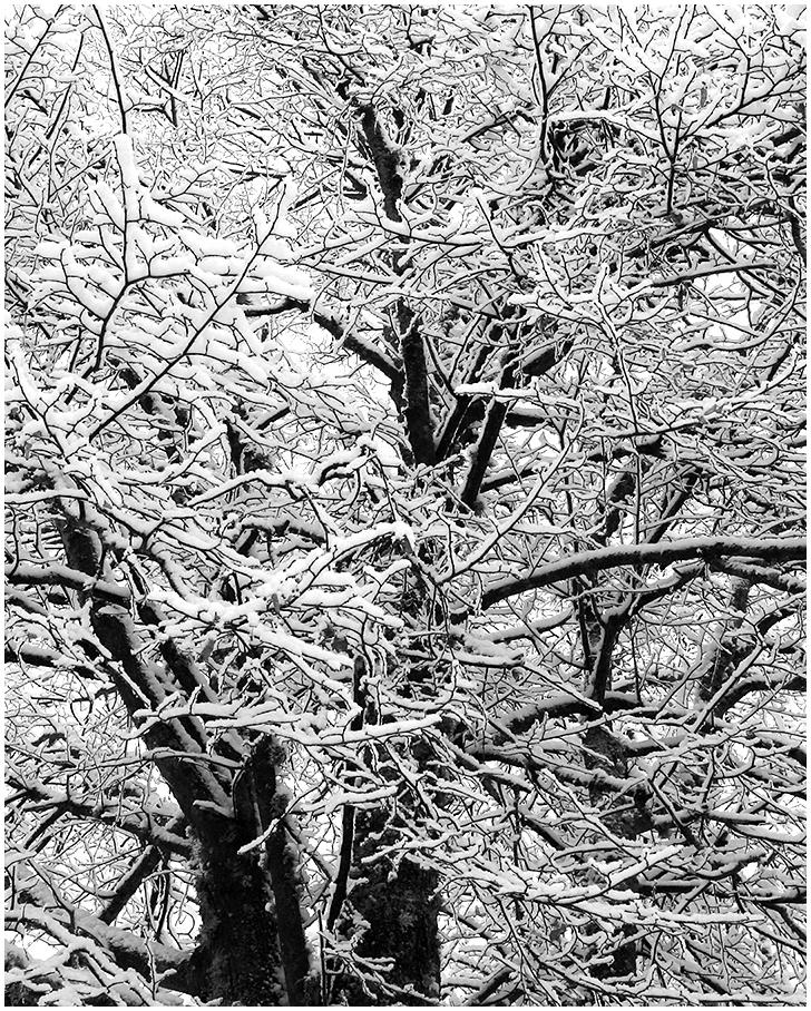Talvemustrid