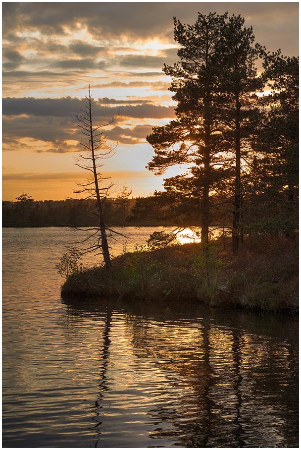 Nigula järv