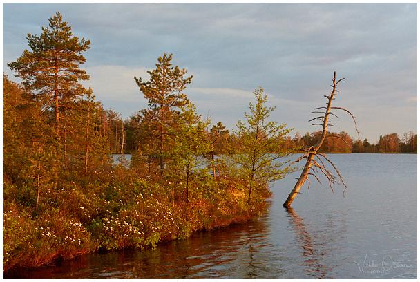 Nigula järv / Lake Nigula, Estonia