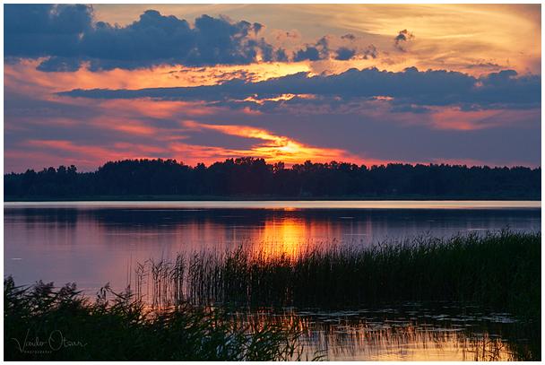 Tamula järv