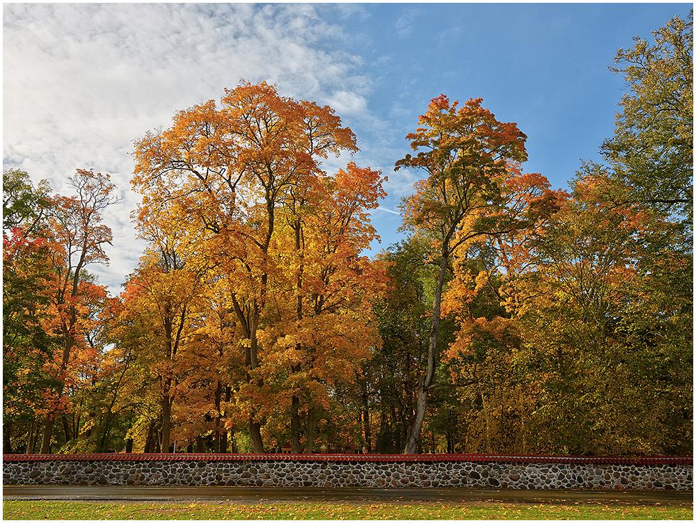 Ahja mõisa park