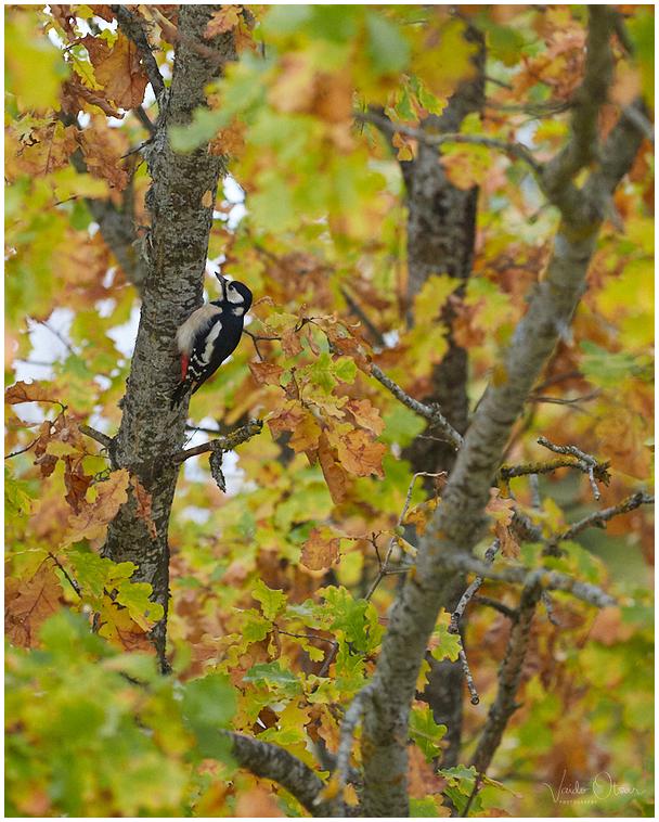 Sügisvärvid / Autumn colors