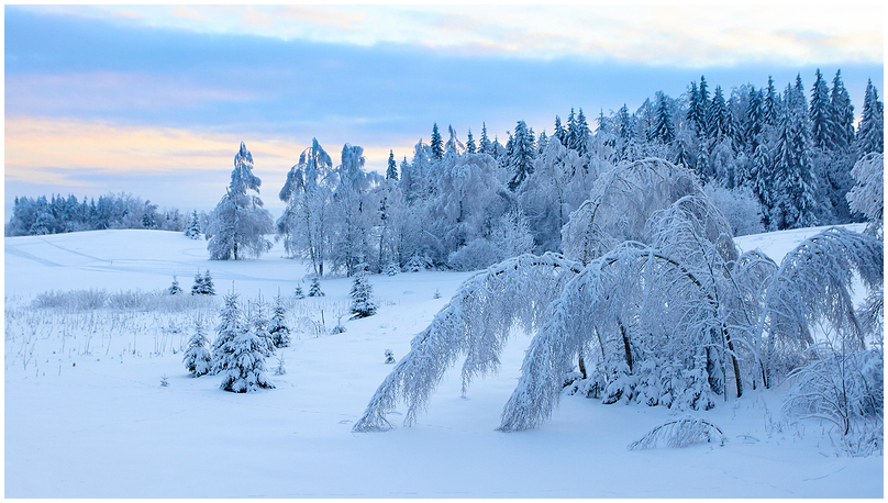 Talveõhtu / Winter evening