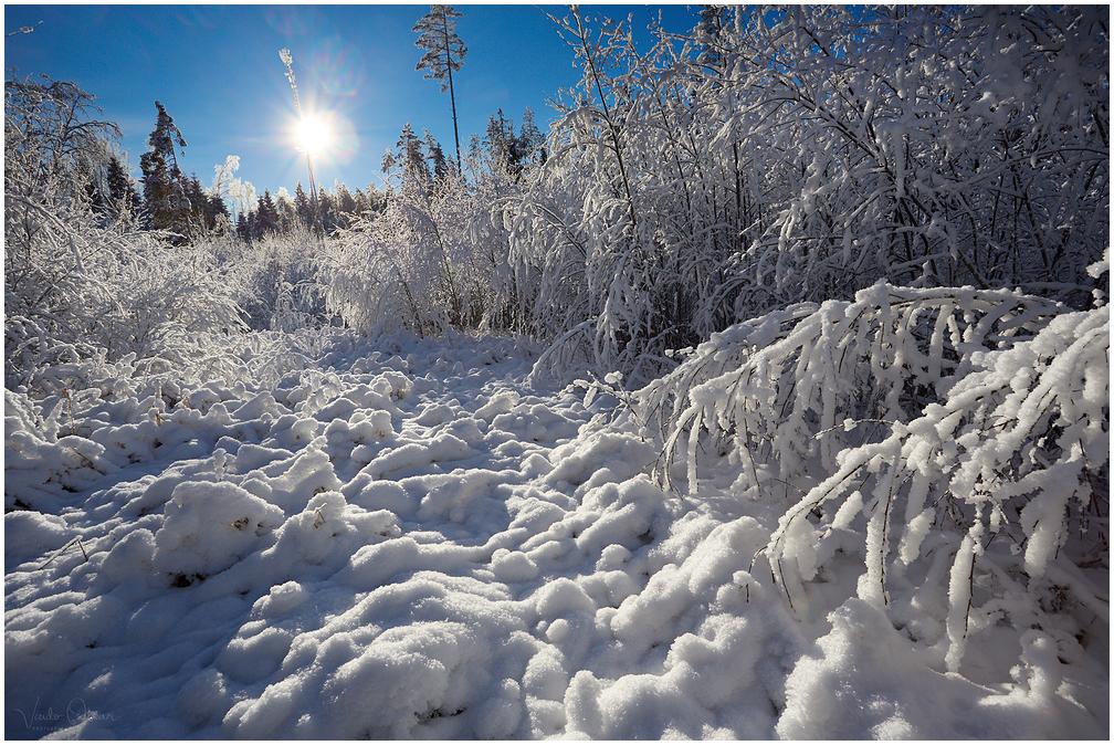 Võrumaa talv
