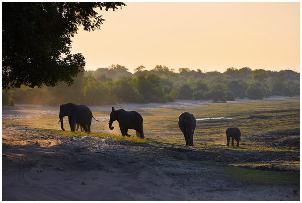 Õhtu savannis / Evening in savanna
