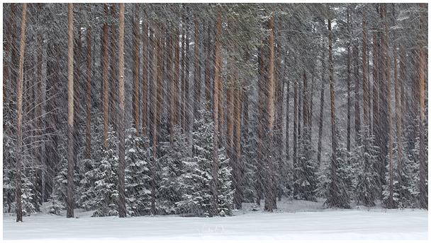 Tuisune päev / Snowy day