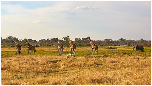 Rohumaa / Grassland