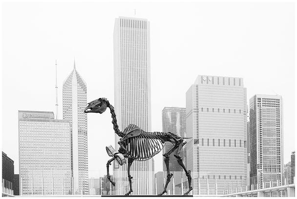 Gift Horse, Chicago