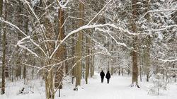 Eesti talv