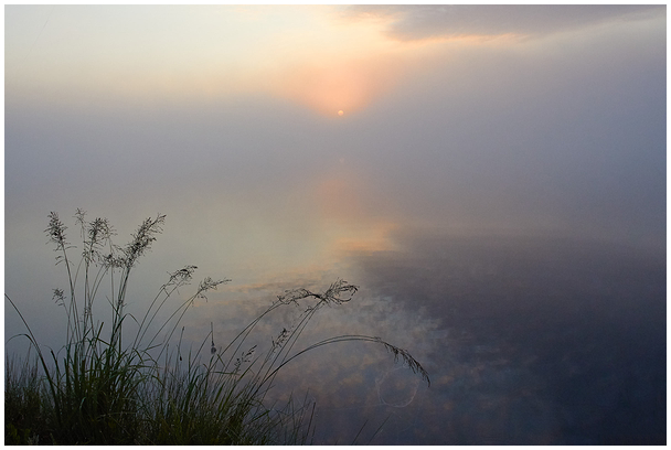 Rabahommik / Morning in bog