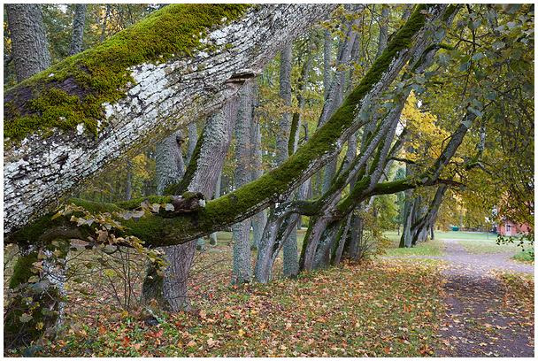 Vanas pargis / Old park